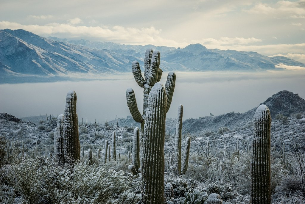Tucson Valley in Winter