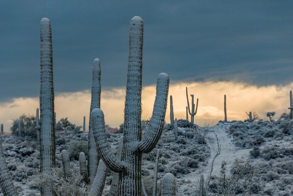 snow-0107-047.jpg